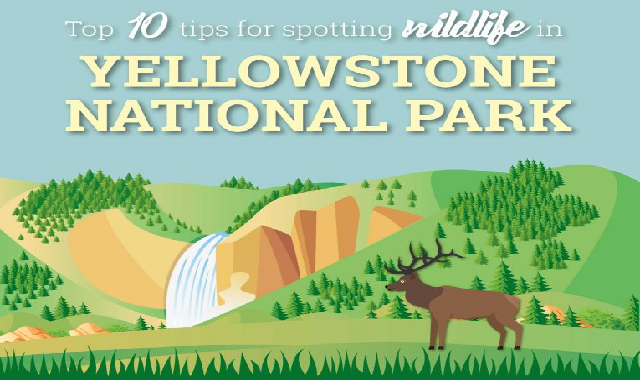 10 Tips For Summer Wildlife Viewing In Yellowstone #infographic