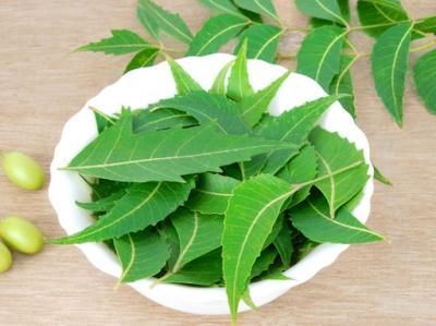 Neem leaf benefits