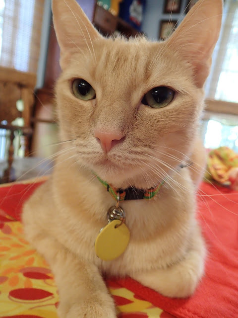 Lone Star Cats: Wordless Wednesday