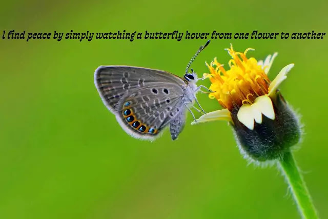 butterfly love poems quotes
