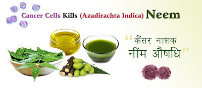 neem-kills-cancer-cells, Neem-Cure-Cancer, cancer-cure-by-neem, नींम-कैंसर-औषधि