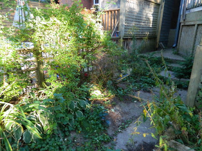 Toronto High Park Back Yard Fall Cleanup Before by Paul Jung Gardening Services--a Toronto Organic Gardening Company