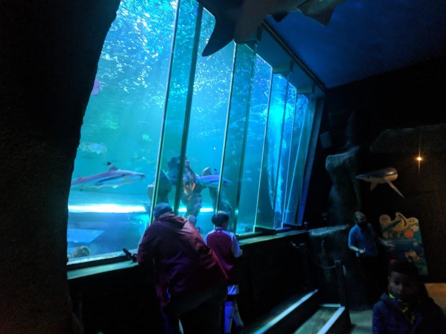 The Best Sea Life Aquariums in the UK  - Sea Life Blackpool