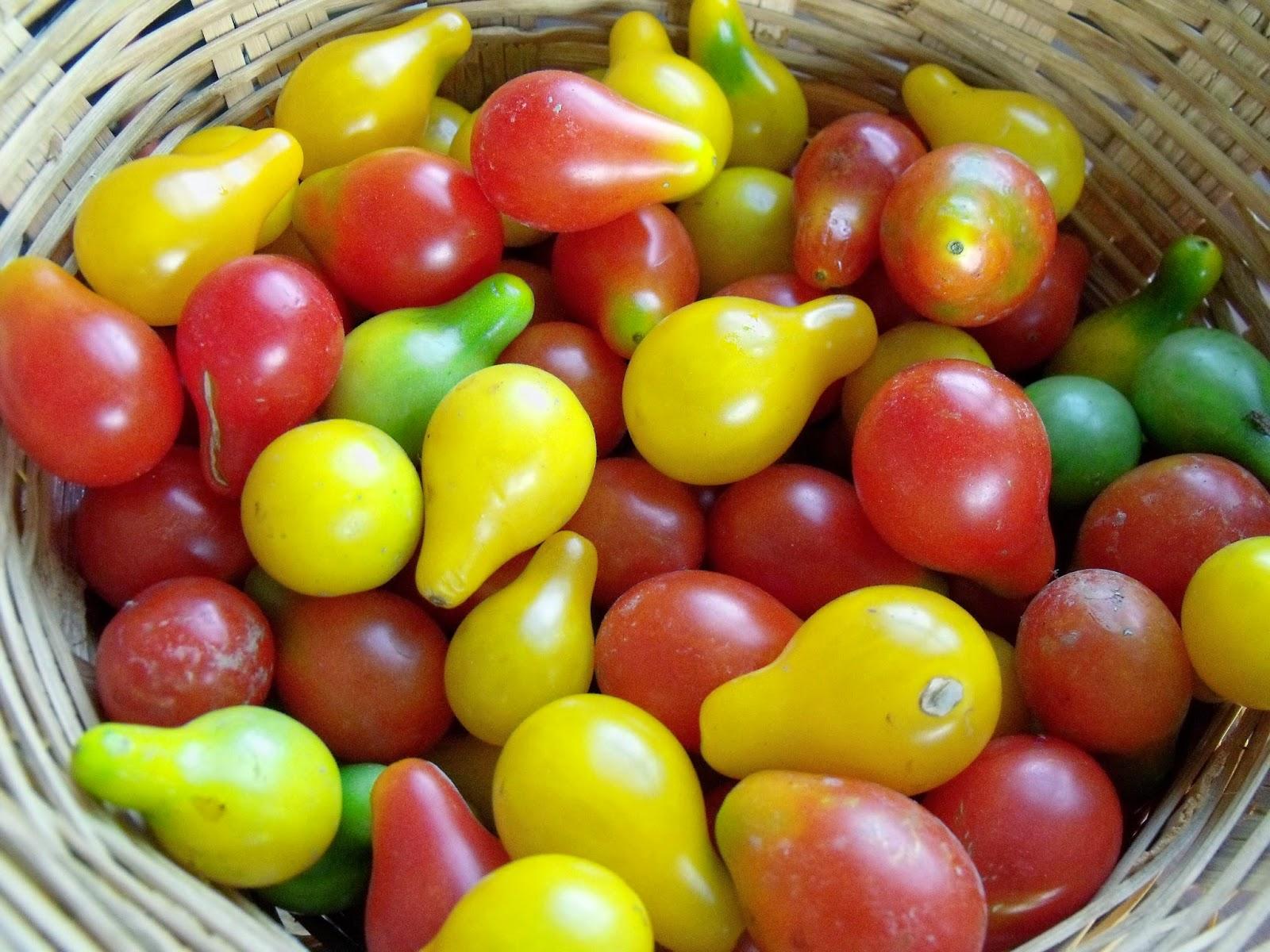 Tuzlanmış domateslerin kalorili içeriği ve diğer yararlı özellikler