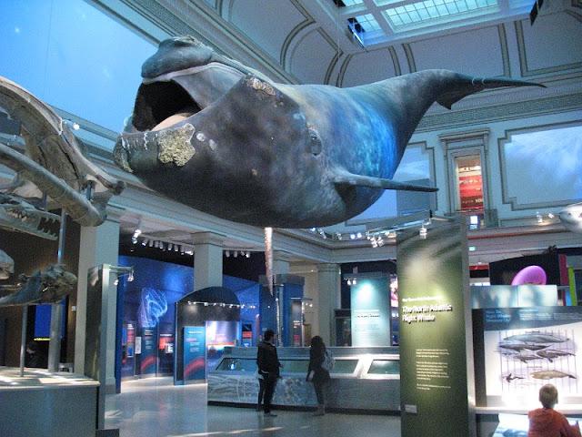 Museu de História Natural em Washington