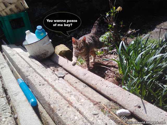 Threatening Cat