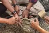 Fosil hewan purba yang ditemukan di Blora