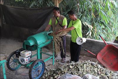 Proses penggilingan jerami dan limbah kulit nanas untuk dijadikan pakan ternak di Sentra ternak Dompet Dhuafa Subang