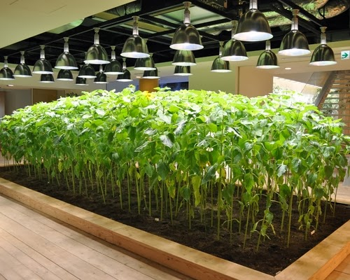 08-Urban-Farm-Building-Architects-Kono-Designs-Pasona-Group-www-designstack-co