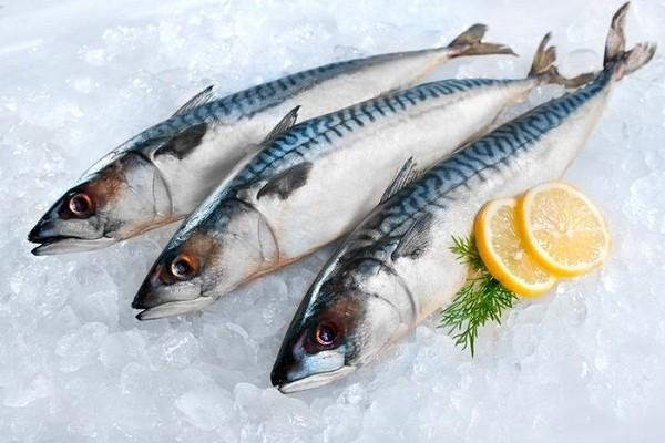 Memilih Supplier Ikan Tenggiri Konsumsi di Jogja Per Kilo