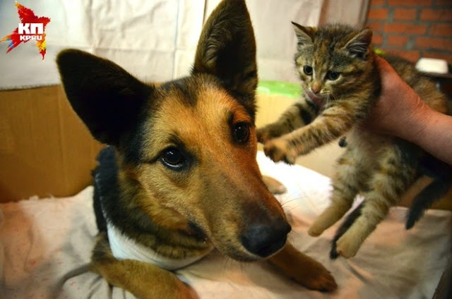 История спасения брошенных котят бродячей собакой!