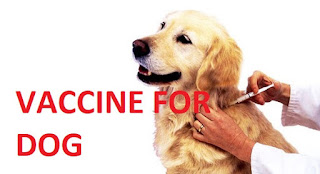 Explanation About The Vaccine For Your Pet Dog