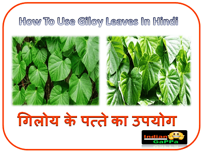 How-To-Use-Giloy-Leaves