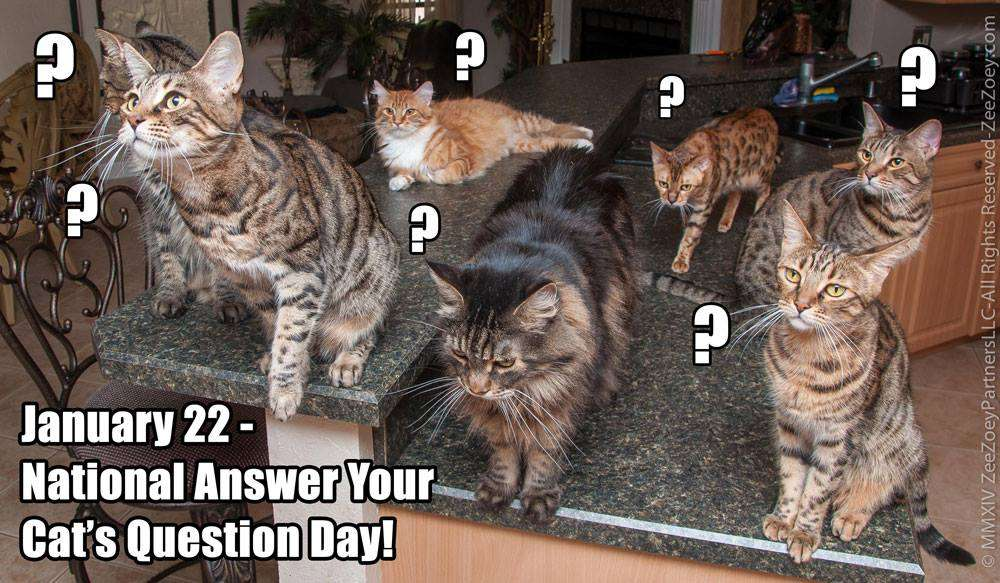 National Answer Your Cat's Questions Day Wishes Images