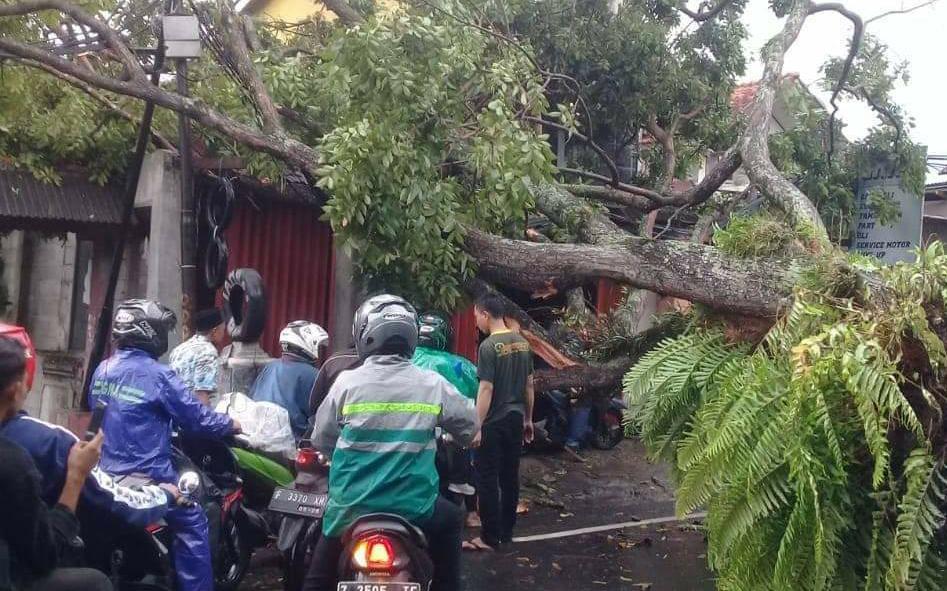 Satu Pohon Tumbang Menimpa Rumah Di Jalan Raya Pacet