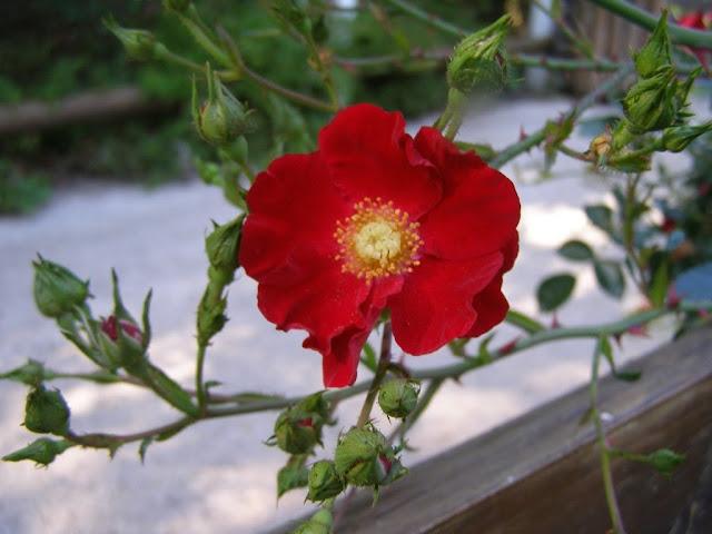 fleur en mémoire des défunts