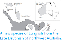 https://sciencythoughts.blogspot.com/2013/03/a-new-species-of-lungfish-from-late.html