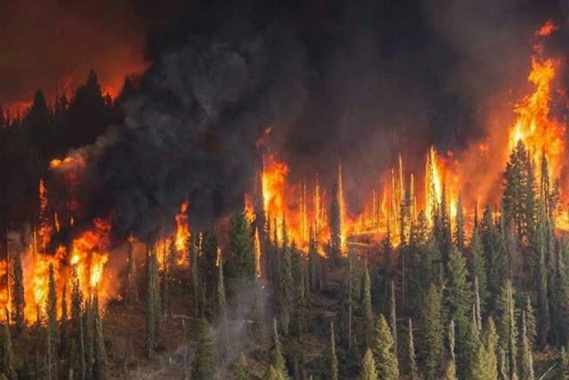В Сибири горит три миллиона гектаров лесов!!! При этом большинство пожаров не тушатся.