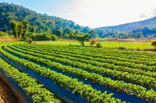 How To Getting Agricultural Sustainability Without Using Pesticides