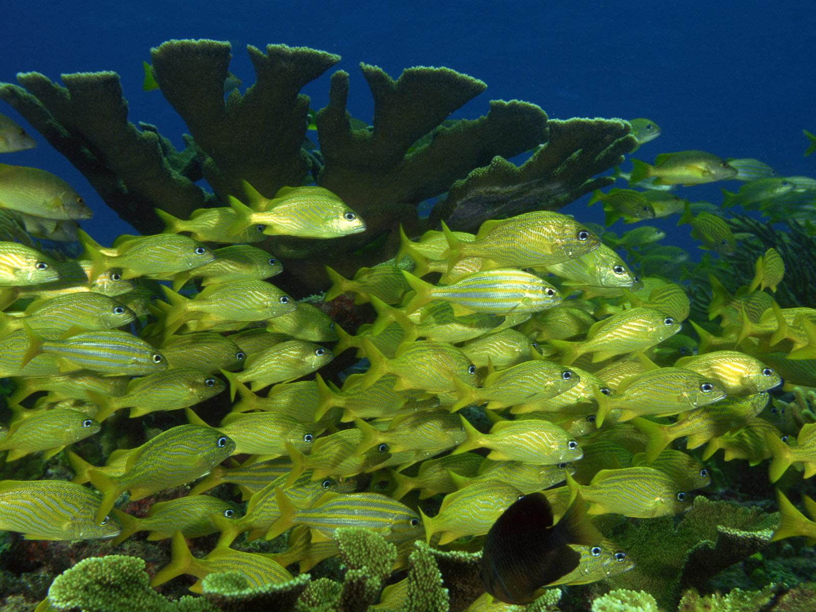 https://1.bp.blogspot.com/-6XpunULfpL4/Tg29N2866FI/AAAAAAAAA9w/S_isY_mtkls/s1600/Underwater%2BWallpaper%2B%25252838%252529.jpg
