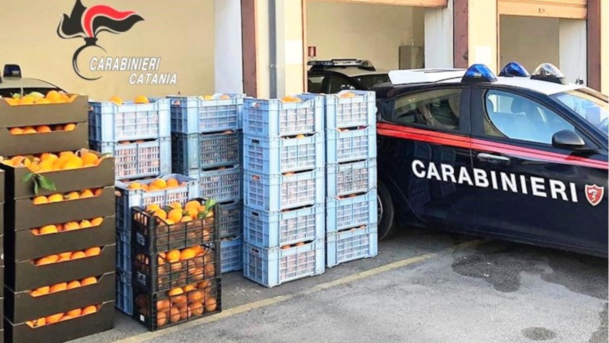 Ladri d'arance Paternò Carabinieri