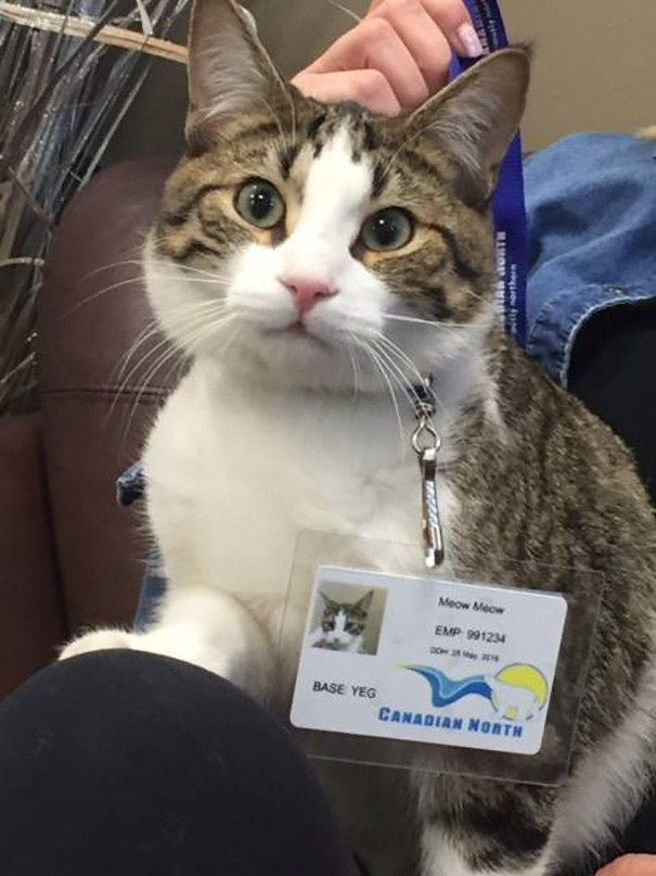 Airlines Break Their Own Rules So Pets Can Escape Fires - Canadian North's staff are even fostering the cat named Meow Meow after her pregnant owner went into labour