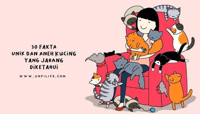 Fakta unuk kucing, Fakta lucu kucing, fakta aneh kucing
