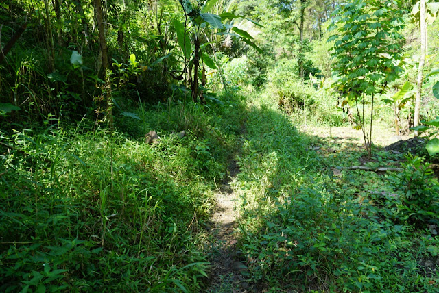hutan yang hijau curug sidoayu kebumen