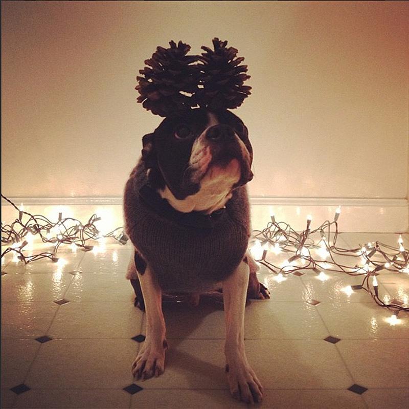 Crazy Dog Bumble Ball Uk