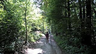 túrázás, erdő, őszim táj, bakony