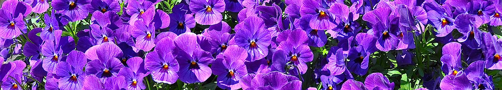 Цветы преподобному Свитберту