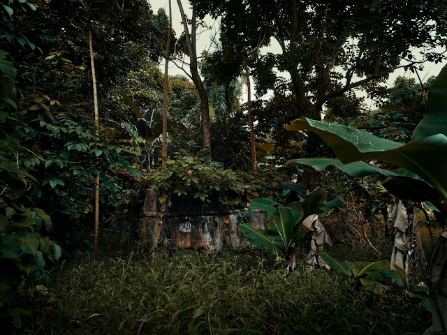 Abandoned Cars Swallowed by Hawaii's Jungles