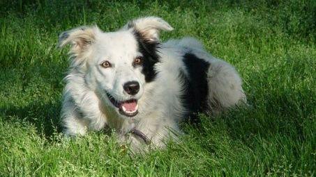 Muere Chaser, el perro más inteligente del mundo