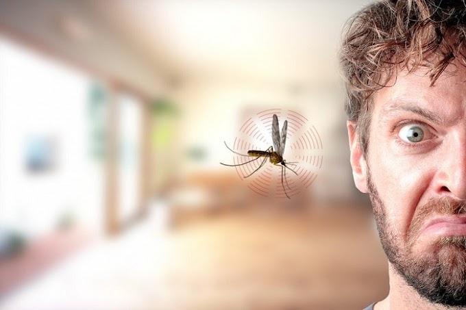 3 Perkara Boleh Mengundang Nyamuk Dekat Dengan Anda