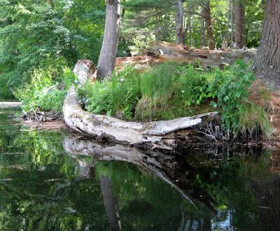 Cranberry Pond Reflections