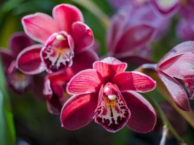 bunga orkid hutan