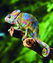 Hay un gran mito detrás de esta criatura ¿sabes cual es?