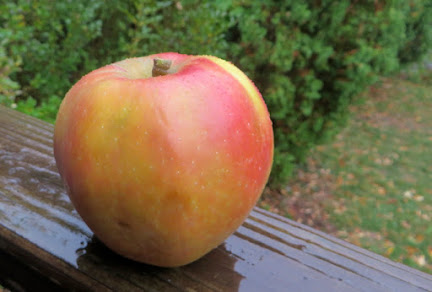 Yellow apple with streaky pink blush