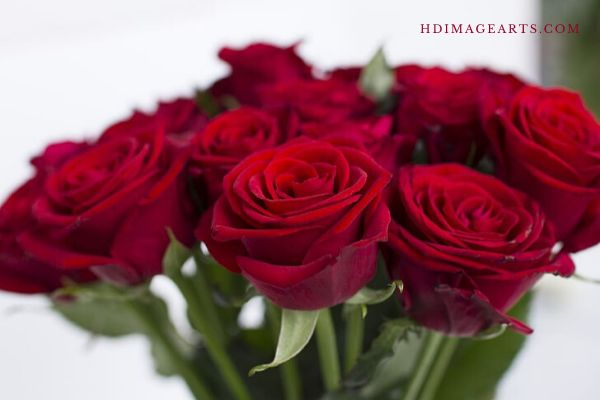 flowers-lmages-for-love-8