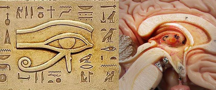 Resultado de imagen de glandula pineal ojo de horus