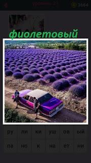 655 слов фиолетовый урожай и такая же машина 21 уровень