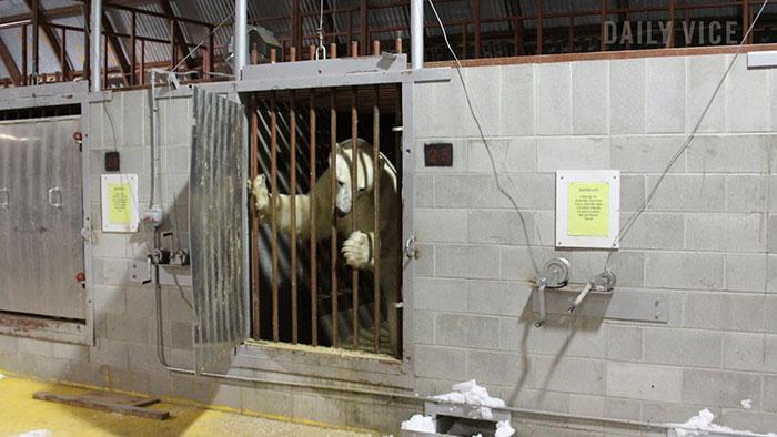 Penjara Beruang Kutub Churchill