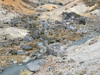 地獄谷の川