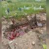 Viral Kuburan Dipenuhi Cairan Merah Seperti Darah, Imam Masjid: Almarhum Orang Baik
