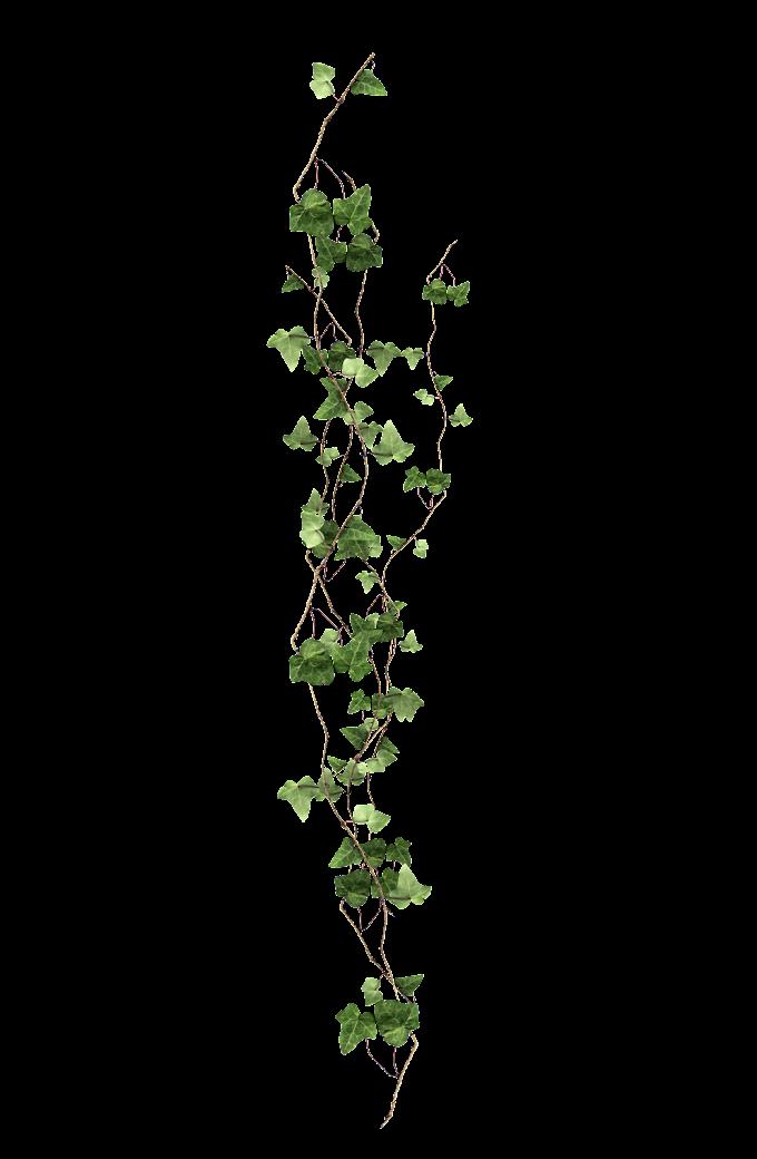 Vine Plant, vine, green leafed plant, leaf, branch, plant Stem png free png