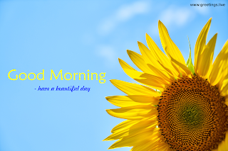 good morning wishes with sunflower image from greetings live