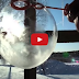 Blowing Bubbles In The Cold Seems Impossible...But The Results Are Incredible
