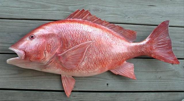 Harga Jual Ikan Kakap Yogyakarta Per Kg 2020
