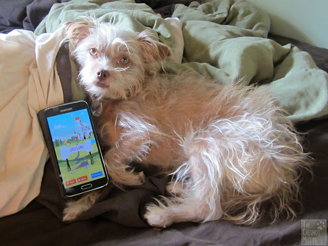 Dog Land App