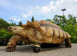 Amazing Picture - Tortoise With Wheel